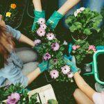 Giardinaggio | I 5 errori da non commettere mai