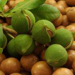 Macadamia | Dalle varietà alle noci commestibili, ecco la sua coltivazione