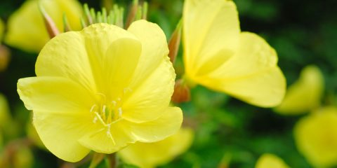 Pacciamatura panoramica dettagliata fai da te in giardino for I fiori della balsamina
