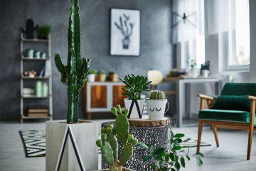 piante-da-interno