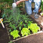 Piccolo orto | Come progettarne uno… geometrico