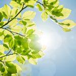 Piante e arbusti ancora spogli | Al Nord Italia il sole serve come non mai