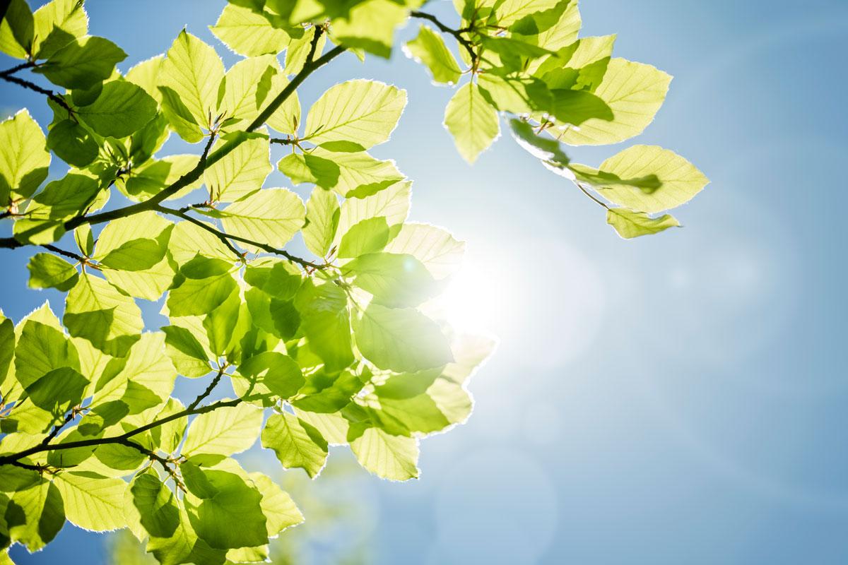 Piante e arbusti ancora spogli al nord italia il sole for Piante da frutto nord italia