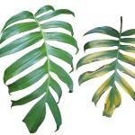 Sintomi | Impariamo a riconoscerli a difesa delle piante