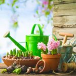 Giardinaggio fai da te | Ecco i lavori da fare a Giugno