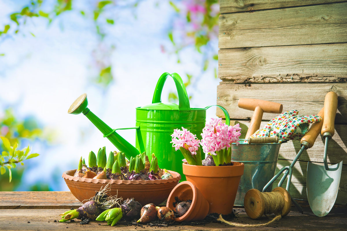 Giardinaggio fai da te ecco i lavori da fare a giugno for Giardinaggio e fiori