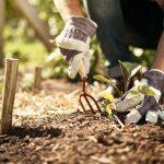 Maggio: i lavori da fare in giardino