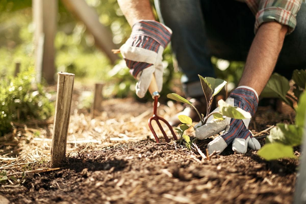 Giardinaggio i lavori da fare a maggio - Lavori da fare a casa ...