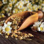 Matricaria | La pianta della camomilla: coltivazione e usi
