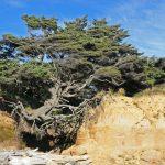 10 piante esempi di… resilienza!