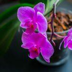 Semi di orchidea | Perché non si acquistano?