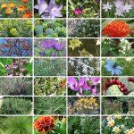 42 piante che non temono la siccità | Quali sono?