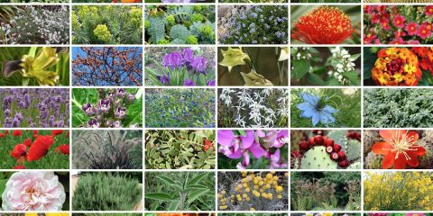 piante che non temono la sete