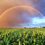 Solstizio d'estate | Si è chiusa una primavera difficile per l'agricoltura