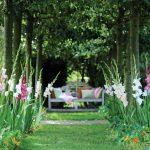 Bulbi estivi | Quali sono e come trapiantarli