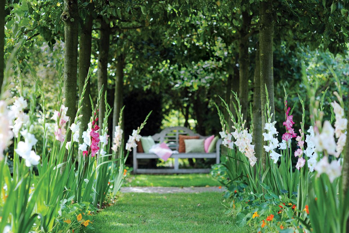 Bulbi estivi quali sono e come trapiantarli - Fiori da giardino estivi ...