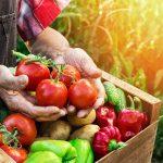 Cosa piantare a giugno? | I lavori dell'orto nei mesi estivi