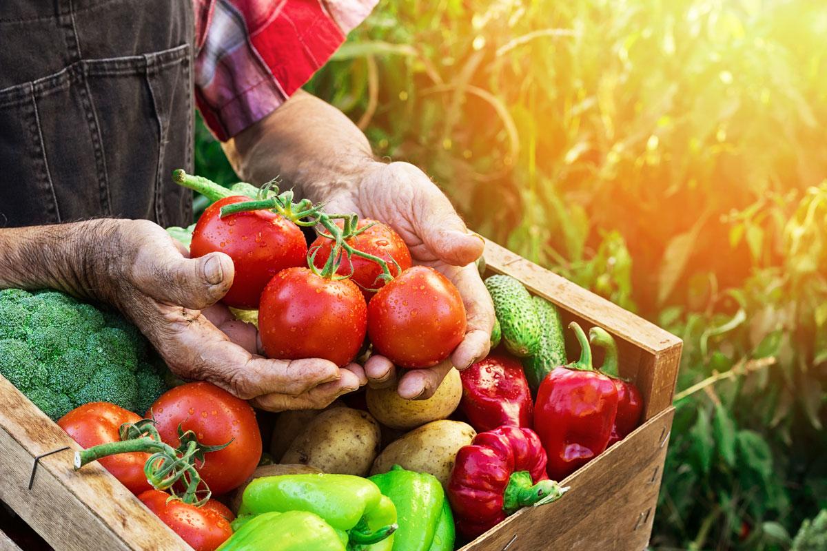 Cosa Seminare A Gennaio cosa piantare a giugno? | i lavori dell'orto nei mesi estivi
