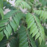 Curry | La pianta e la spezia: cosa c'è da sapere