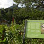 Il Giardino Botanico Alpino Viote spegne le 80 candeline!