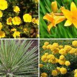 5 piante xerofile | Quali sono quelle che amano il caldo?