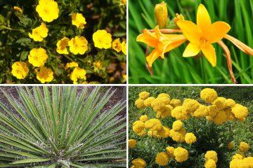 piante xerofile
