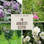 10 arbusti estivi | Arbusti decorativi in giardino