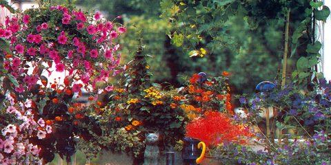 fiori a cascata