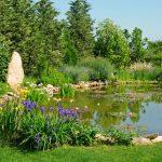 Laghetto con piante acquatiche e rigoglioso giardino