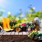 Quali lavori fare ad agosto in giardino? | La lista completa