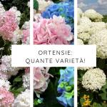 Varietà ortensie | Tanti fiori, grandi soddisfazioni!