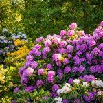 Piante acidofile | Elenco delle acidofile da giardino più comuni