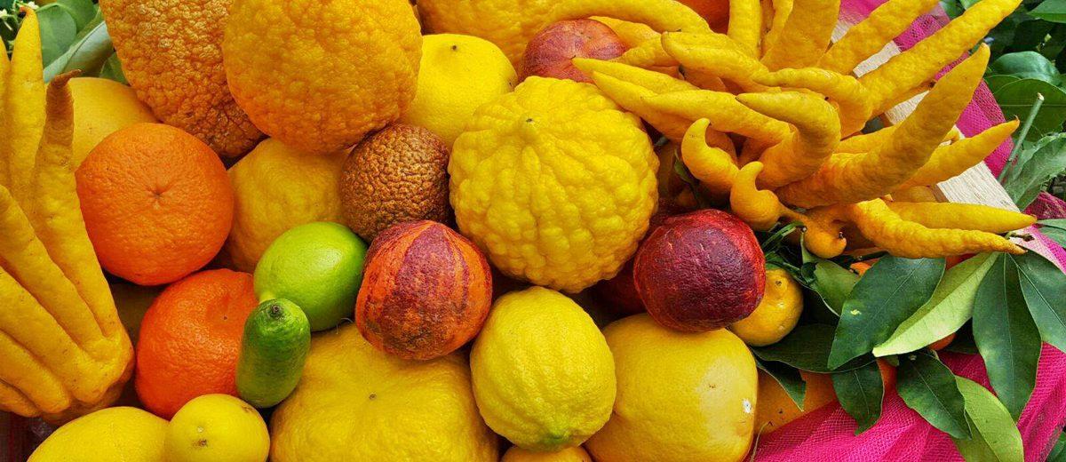 new design details for best sale Tipi di agrumi | Dalla Mano di Buddha al caviale di limone