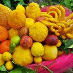 Tipi di agrumi | Dalla Mano di Buddha al caviale di limone