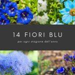 14 fiori blu per tutte le stagioni