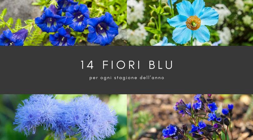 Fiori Gialli E Bianchi Nomi.14 Fiori Blu Per Tutte Le Stagioni Dalla Primavera All Inverno