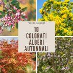 10 Piccoli (e colorati) alberi autunnali