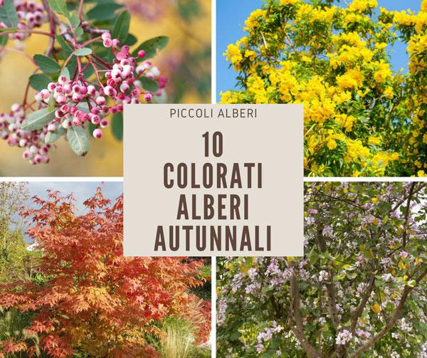 10 piccoli e colorati alberi autunnali da piantare in - Piccoli alberi da giardino ...