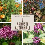 9 Colorati arbusti autunnali per un giardino vivace fino all'inverno