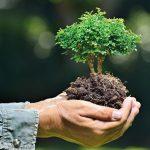 Cura dei Bonsai | Sempreverdi, spoglianti, da fiore e da frutto