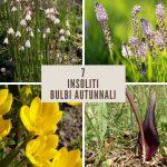 Bulbose autunnali | 7 insoliti bulbi a fioritura autunnale