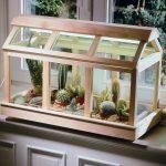 Serra per piante grasse | Cactacee sotto vetro
