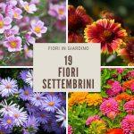Fiori di settembre | 19 specie per un autunno colorato