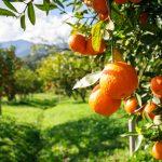 Come formare degli alberi da frutto