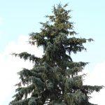 Settembre: tempo di piantare le conifere!