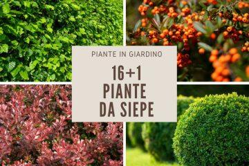 Siepi Da Giardino Crescita Veloce : Piante da giardino sempreverdi e fiorite quali scegliere