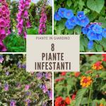 8 piante infestanti, ma decorative