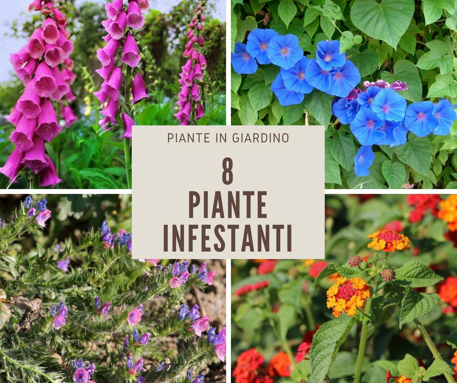 8 piante infestanti ma decorative fai da te in giardino - Piante decorative da giardino ...
