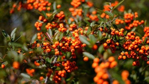 Piante Per Recinzioni Giardino.17 Piante Da Siepe Fai Da Te In Giardino
