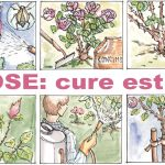 Curare le rose in estate